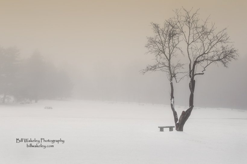 The Solitude of Winter